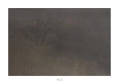 Endure the Times (Max Angelsburger) Tags: winter landscape tree baum fog mist nebel haze dunst braun erdfarben brown february februar 2019 niefern öschelbronn kirnbachtal gaisberg tannenberg deutschland germany pocketworldiglandscapedreamspotsvisualheavenlandscapephotolandscapelovernatgeoadventureearthexperiencemthrworldmajesticearth