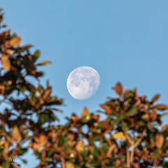 Morning Moon (Michael Seeley) Tags: canon florida gibbousmoon melbourne michaelseeley mikeseeley moon moonpictures morningmoon waninggibbousmoon