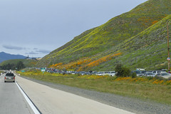 No Parking Spaces Available! (dcnelson1898) Tags: california southerncalifornia lakeelsinore losangeles interstate5 i5 travel traffic vehicles unitedstates usa america poppies flowers superbloom