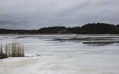 Naantali, Finland , March 2019 (Steve Weaver) Tags: naantali finland suomi discover visit winter beauty nature sea ice frozen feeze thaw snow sky clouds outdoor forest trees man walking melt bird jetty boat