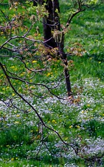 (Tzn_shots) Tags: ilovenature naturephotography zenzabronicamc150 springishere spring2019 spring garden gardening bronica zenzabronica 150mm vintagelens mirrorless apsc fujifilmxt20 fuji fujifilm xt20