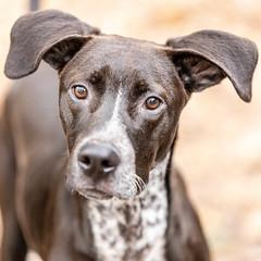 Albus18Jan201922.jpg (fredstrobel) Tags: dogs pawsatanta atlanta usa animals ga pets places pawsdogs decatur georgia unitedstates us