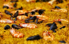 Paella / Food (Mike Reichardt) Tags: spielereien minimalism minimal makro macro foof nahrung essen paella color spain spanien