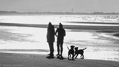 brief encounter (RCB4J) Tags: ayrshire ayrshirecoast babygrace clydecoast firthofclyde irvinebeach jakob rcb4j ronniebarron scotland siameselurcher trailhound adventure art beach blackandwhite dogwalkadventures dogs monochrome photography sandstorm severeconditions spectactular windy silhouette contrejour hss