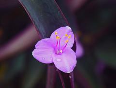 Dreaming of spring,surrounded by flowers (kirsten.eide) Tags: macro dslr nikon botanical gardens spring flowers