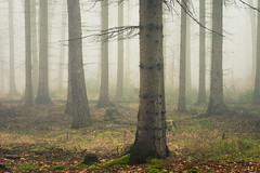 Beautiful Nature in uncertain Times (Netsrak) Tags: baum eu eifel europa europe forst landschaft natur nebel rheinland rhineland wald fog forest mist nature trees winter woods bäume