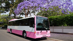 50 Seater Pink Party Bus