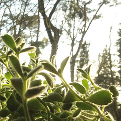 (#avril#) Tags: trees succulent