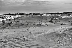 Test of Time (delmarvajim) Tags: bw blackandwhite monochrome landscape sanddunes beach beachgrass clouds sky light shadow naturaltexture assateagueisland