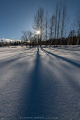 Sun and... Shadows (stefano.sedrani1) Tags: atmosphere scenery travel beautiful nature landscape nikon winter shadow trees snow frozen finland lapland