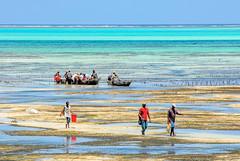 Heimkehr vom Fischfang (+he-photography+) Tags: sansibar boote fischer riff strand