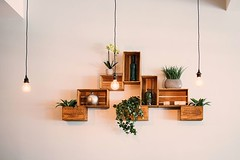 Gorgeous wooden shelves with indoor plants pot, and minimalist pendant lights, That'll do it for me...  #indoorplants #houseplants #indoorgarden #plantlove #instaplants #plantsmakepeoplehappy #urbanjunglebloggers #plantstagram #indoorgardening #plantlover (CoolHomeStyling) Tags: instagram ifttt