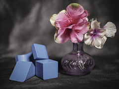 Wooden Blocks and Vase with Flowers (N.the.Kudzu) Tags: tabletop stilllife blue wooden blocks small glass vase flowers lightroom