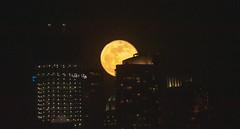 The Full Wolf Moon rises over NYC on Jan. 21, 2019. (apardavila) Tags: esb empirestatebuilding fullwolfmoon hoboken manhattan nyc newyorkcity fullmoon moon moonphoto moonphotography moonrise night nightphoto nightphotography skyline skyscraper