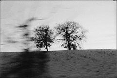 * (PattyK.) Tags: nikond3100 snapseed january 2019 greece grecia griechenland hellas ellada balkans europe europeanunion ελλάδα βαλκάνια ιανουάριοσ χειμώνασ winter δέντρο φύση nature tree monochrome blackandwhite grevena makedonia macedonia γρεβενά μακεδονία χωράφι