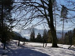 Winterlicher Wald / Wintry forest (rudi_valtiner) Tags: wanderung20190206 gutensteineralpen gelände winter schnee snow grünbachersattel grünbachamschneeberg niederösterreich loweraustria alpen alps österreich austria autriche bäume trees wiese meadow gatter gate tor wald forest buche beech