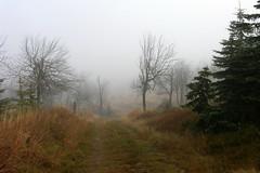 2005-11-06 Foggy Autumn (beranekp) Tags: czech krušné hory erzgebirge autumn fojtovice tree baum lysá hora way