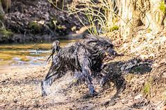 20190215-IMG_8711 (Alderbabbsack) Tags: struppi hund