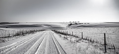 white and black and white #2 (Redheadwondering) Tags: sonyα7ii snow salisburyplain wiltshire winter landscape tracks byway road sigma sigma2470lens blackwhite bw