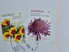 Rose Coneflower [Australian $1 stamps] (Dreaming of the Sea) Tags: australia stamps flowers 1 bribieisland nikon tamronsp2470mmf28divcusd nikond7200 roseconeflower spinymirbelia bongaree 2019 macro wednesdaymacro will