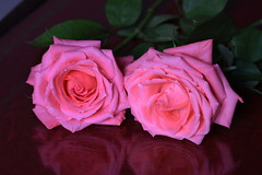 DSC_2789 (PeaTJay) Tags: nikond750 sigma reading lowerearley berkshire macro micro closeups gardens indoors nature flora fauna plants flowers rose roses rosebuds
