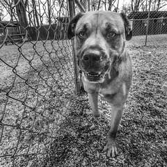 Skye18Jan201959-Edit.jpg (fredstrobel) Tags: dogs pawsatanta phototype atlanta blackandwhite usa animals ga pets places pawsdogs decatur georgia unitedstates us