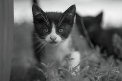 curious... (milance1965) Tags: schwarzweiss blackwhite nikon nikond700 nikkor105mmmicro micronikon macro abigfave