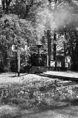 BWLR 87816bw (kgvuk) Tags: bwlr bredgarandwormshilllightrailway kent railway narrowgauge train steamtrain locomotive steamlocomotive steamengine zambezi 042t warrenwood