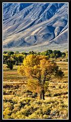 Foothills_6993 (bjarne.winkler) Tags: photo foto safari 20181 day 16 fall color foothills mountains eastern sierra