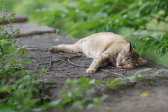 Tortoiseshell Cat (Flexible Negativity) Tags: 猫 cat 貓 meow ねこ caturday nuko k70 pentax tortoiseshell