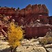 A Varied Landscape Across Capitol Reef National Park