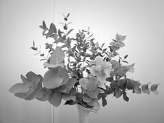 harada-flowers-53 (annie harada) Tags: flowers hana blumen fleurs bouquet noir et blanc black white