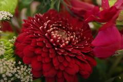 RICOH GR 02 flower macro (HAMACHI!) Tags: flower flowermacro macro tokyo 2019 japan ricoh ricohgriii ricohimaging ricohgr gr gr3 griii loadtest cameratest
