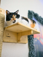On the shelf (donnicky) Tags: cat domesticanimal home indoors lowangleview nopeople oneanimal pet publicsec shelf wooden лилу