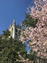 National Cathedral in spring (KFiabane) Tags: nationalcathedral washingtondc