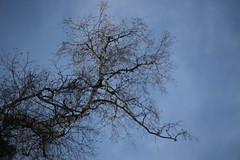 Silhouettes (gripspix (Easter Break 4 Family)) Tags: 20190216 schwenningermoos swamp sumpflandschaft moor tree baum silhouettes sihouette baumkrone treetop
