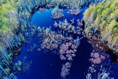 West Branch Wading River (reclaimednj) Tags: chatsworth newjersey unitedstates us nj 2018 mavic2pro aerialphoto pinelands pinebarrens