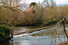 Salmon Pool Weir, Exeter (Keith in Exeter) Tags: river water weir damage broken exe exeter devon tree woodland landscape