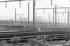 N&B_20181228_115515_0017 (Olivier_1954) Tags: natureetpaysages paysages arbres bouclenoir crpc canal nb végétaux brouillard brume chemindefer formation gare givre halage rail wagon charleroi hainaut belgique be
