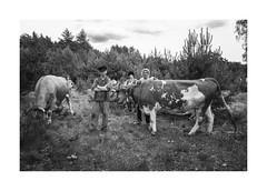 Man, boys and cows (Paphylo) Tags: 28mm man leicaq monochrome cows people animals blackandwhite outdoor thepaintedbirdmovie boys document littledoglaughednoiret 400asa