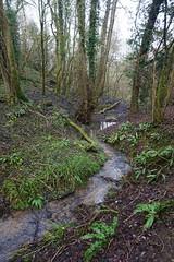 DSC08770 (olliethewino) Tags: bath englishcombe trees stream wood