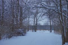 Snow at the Park (Anton Shomali - Thank you for over 3 million views) Tags: cloudy clouds kankakee river trees tree snow nature park snowatthepark perry farm bradley illinois perryfarm us usa america ngc