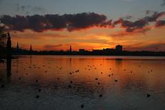 Der Himmel über Hamburg 1-5 (Elbmaedchen) Tags: alster sonnenuntergang januar abendhimmel blauestunde reflektion reflection sundown hamburg wasserspiegelung hamburgskyline ausenalster kraftwerkmoorburglaesstgruessen goldenestunde wolkenformationen kirchtürme