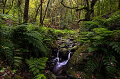 Mágico perder (f25design) Tags: water waterfall nature tree stream moss leaf wood fern vegetation landscape outdoors forest plant park wilderness green woodland outdoor grass noperson naturereserve ecosystem lagomera dream
