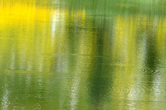 Summer Trout Rising (NaturalLight) Tags: yellow wildflower reflections lake snowyrange summer wyoming ripples