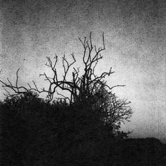 Old dead tree (Rosenthal Photography) Tags: washiw25 rolleiflex35f winter tetenaleukobrom1120°c3min 6x6 schwarzweiss ilfordrapidfixer asa25 bäume 20181205 pflanzen epsonv800 mittelformat städte ff120 anderlingen analog landschaft dörfer siedlungen olddeadtreeold treedead treetreemoodlandscapejanuarylonleytreedarkdarknessdaysofdarknessrolleirolleiflexf3535f75mmskxenotarschneiderkreuznachwashifilmwashiwashiwtetenaleukobrom11epsonv800