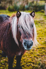 Bad Hair Day (Octal Photo) Tags: 500px grassland grass grazing hayfield rural pasture meadow pony horse horses countryside animals bad hair day dunoon scotland unitedkingdom