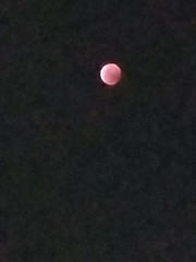 January 21, 2019 (osseous) Tags: 2019january full moon eclipse blood