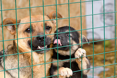 Mother (petr.petrov) Tags: animal animals dog pet homeless puppy cute face sad shelter russia creature eyes
