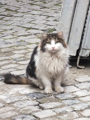 Istanbul cat (CyberMacs) Tags: istanbul nature places turkey animal cat cute kedi kitty mammal